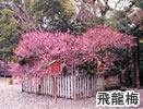 keidai_map_ume.jpg
